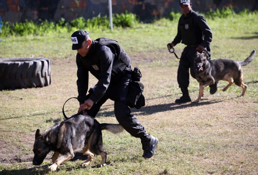 Treinamento de policiais do Batalhão de Operações com Cães (BAC)
