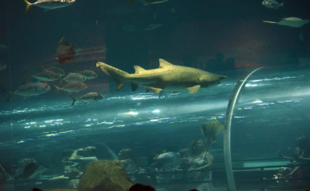Tubarões do AquaRio - Foto: Alexandre Macieira