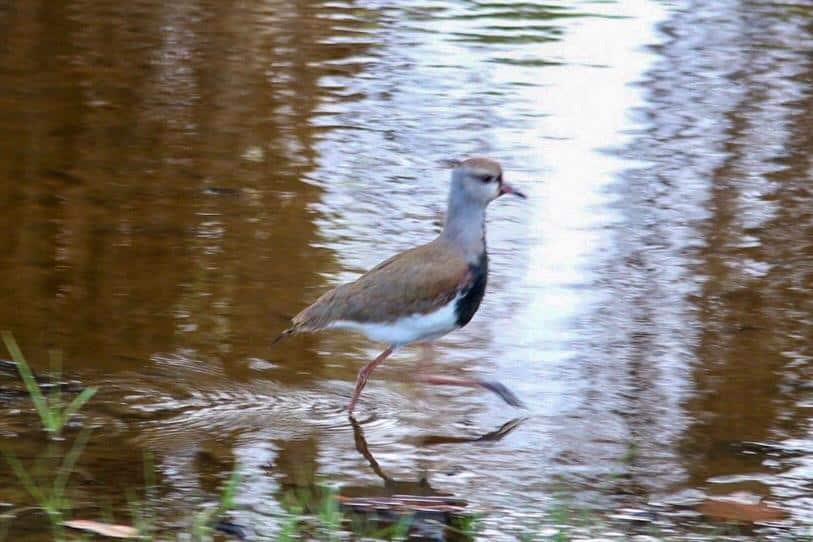 Mais de 30 espécies de aves foram registradas no Bosque da Barra no sábado