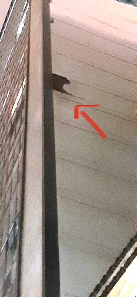 Ficou bem claro o dano ocasionado pelas chuvas à fachada lateral do prédio da Rua do Mercado, e o imenso pedaço de reboco caiu em cima dos prédios 2/4/6 da Travessa do Comércio, que tiveram grandes danos aos seus telhados. Segundo a proprietária, o telhado acabara de ser refeito, ao custo de 40 mil reais. (Foto: Tic Tac Administradora)